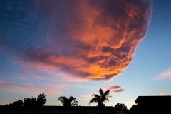 17-ANYE-Santa-Barbara-CA-cloud-palm